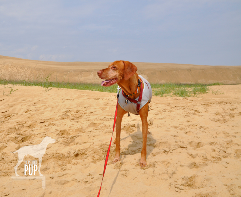 Tavish at Jockey's Ridge