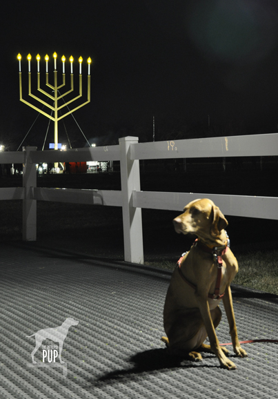 Tavish in President's Park with the 2012 National Menorah