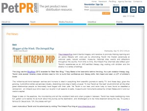 PetPR Blogger of the Week: Intrepid Pup
