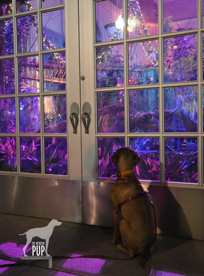 Tavish looking at the train display at the US Botanic Garden