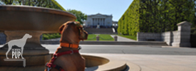 Tavish at Arlington National Cemetery - Tomb of the Unknowns