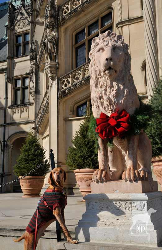 Tavish and the Biltmore lion