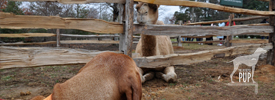 Tavish with Aladdin the Christmas camel at Mount Vernon