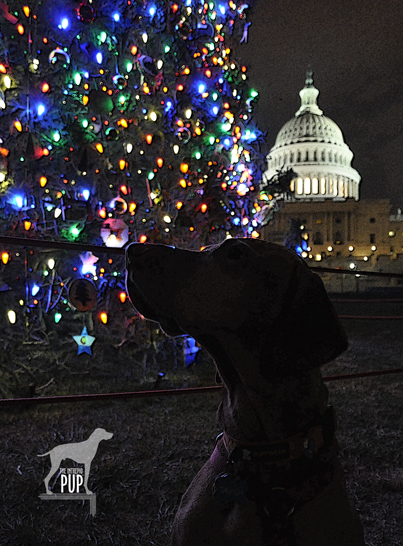 Tavish with the 2012 Capitol tree