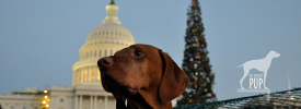 Tavish with the 2011 Capitol tree