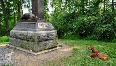 Gettysburg_wolfhound