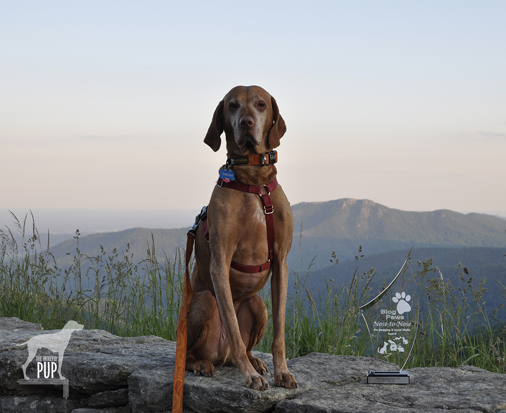 Tavish at Shenandoah National Park