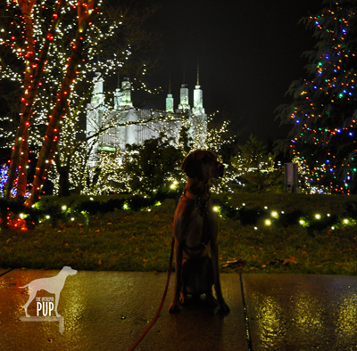 Tavish at the LDS Temple's Festival of Lights