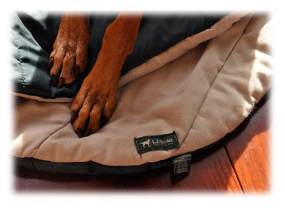 L. L. Bean dog pad