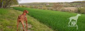 Tavish on the Brooks Hill Loop Trail, Monocacy National Battlefield