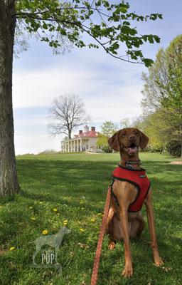 Tavish at Mount Vernon