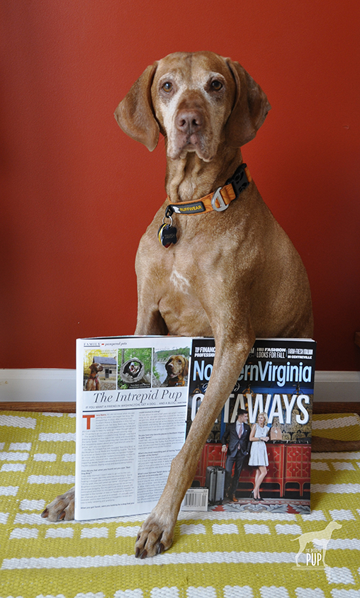 Tavish in Northern Virginia Magazine
