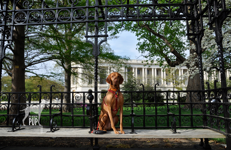 Tavish on Capitol Hill