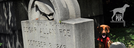 Tavish at Poe gravesite