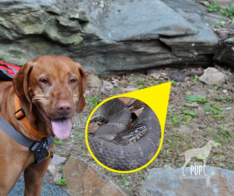 Tavish sees a snake