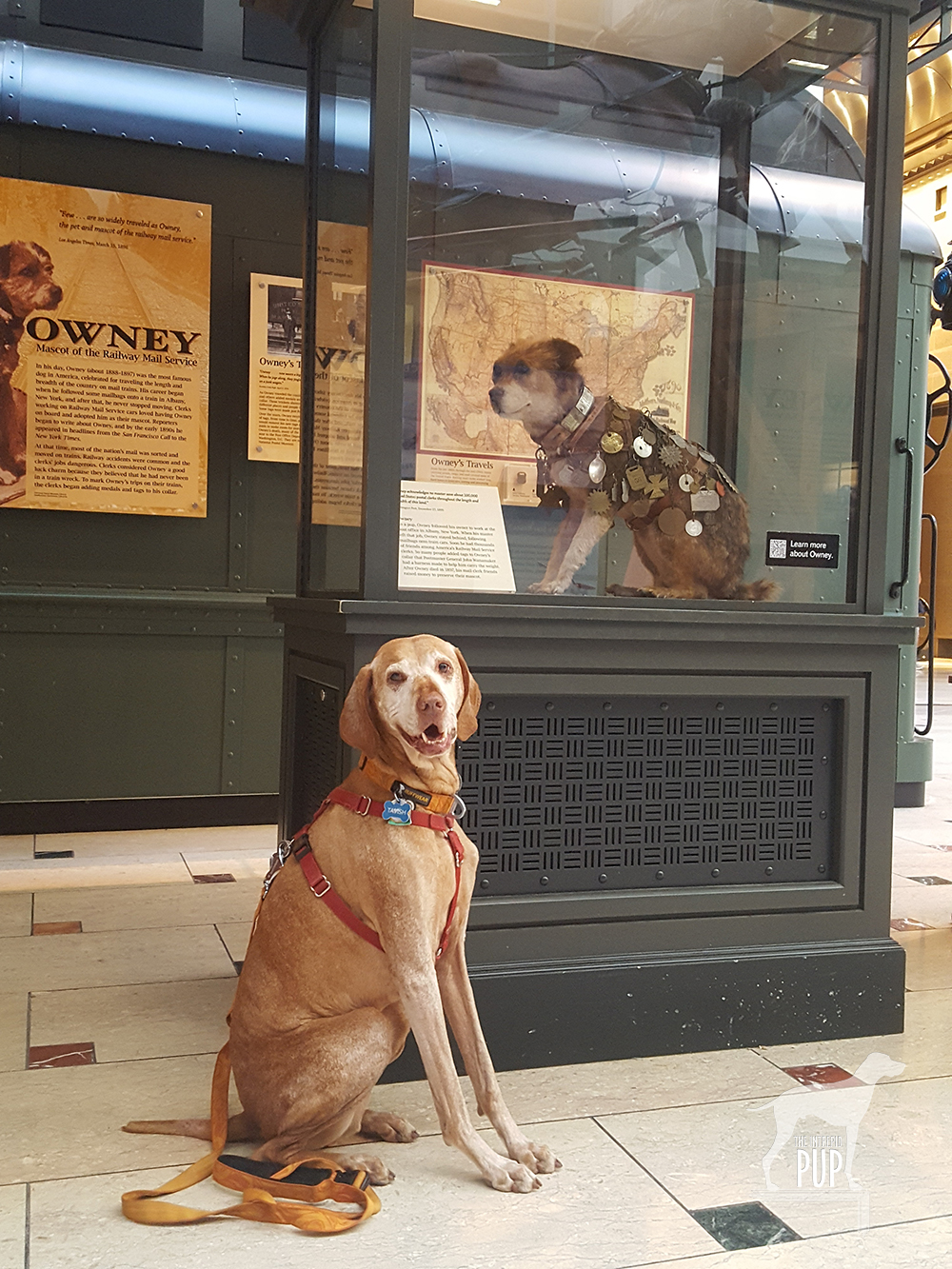 Tavish with Owney
