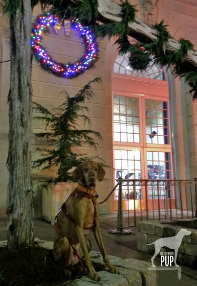 Tavish under the kissing ball at the US Botanic Garden