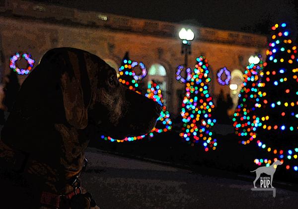 Tavish with the holiday lights at the US Botanic Garden