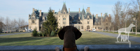 Tavish at the Biltmore