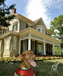 Intrepid Pup at Cedar Hill