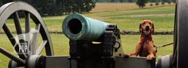 Tavish at Gettysburg