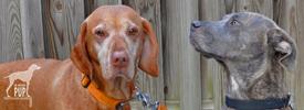 Tavish with Lucky Dog Sasha