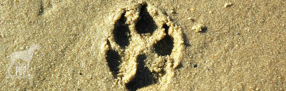 pawprint on the beach
